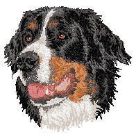 Bernese Mountain Dog 4 Dv207