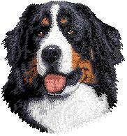 Bernese Mountain Dog D13
