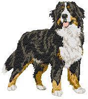 Bernese Mountain Dog 3 (body) Dm194