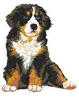 Bernese Mountain 2 (puppy,body) Dm179