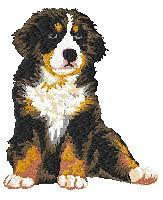 Bernese Mountain 2 (puppy,body) Dm179
