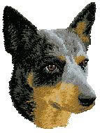 Australian Cattle Dog D99