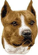 American Staffordshire Terrier d54