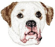 American Bulldog D132