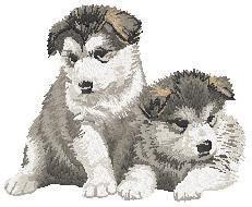 Alaskan Malamute 2 (2 puppies) Dn191
