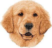 Golden Retriever (puppy) D60