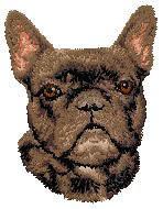 French Bulldog D98