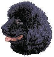 Newfoundland 2 (puppy) D97
