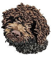 Lagotto Romagnolo (brown) Dv168