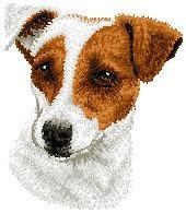 Jack Russell Terrier D26