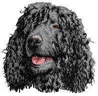 Irish Water Spaniel D145