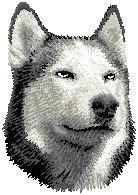 Siberian Husky D17