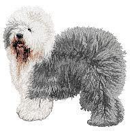 Old English Sheepdog 2 (body) Dv211
