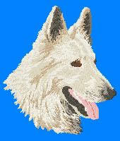 White Swiss Shepherd Dn175