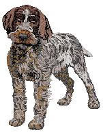 Wirehaired Pointing Griffon (body) Dv193