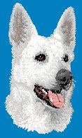 White German Shepherd D122