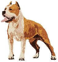 Staffordshire Terrier (body) Dj226