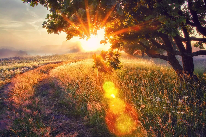 Mother Earth Grounding Meditation
