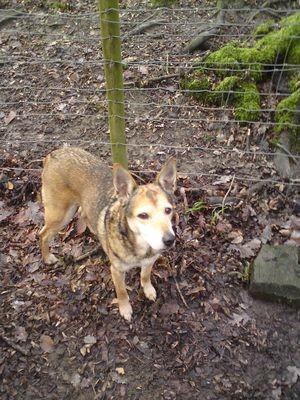 Natural Dog Treats - Dried Tripe 1kg
