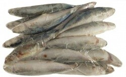 They Love It - Scad Fish - 1kg