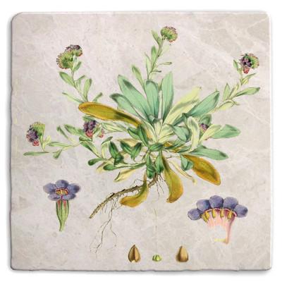 Botanical 10