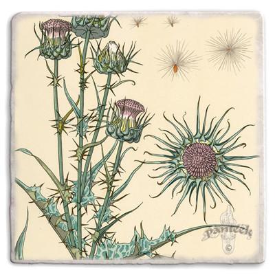 Botanical 11