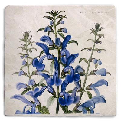Botanical 13