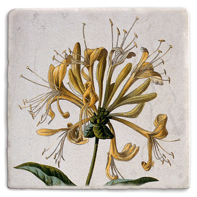 Botanical 19