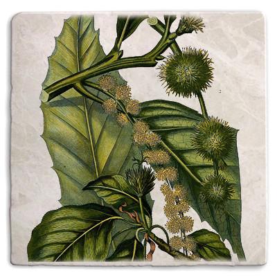 Botanical 21