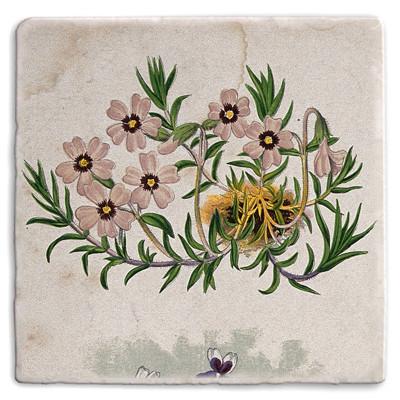 Botanical 23