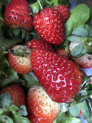 Frutillas (1 kilo)