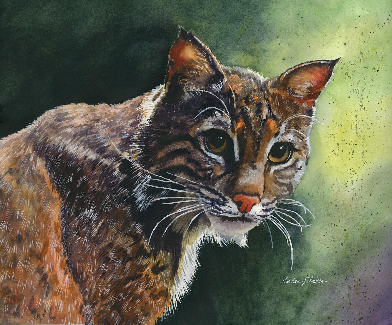 Golden Eyes Bobcat-giclee 11x14 - SCF022