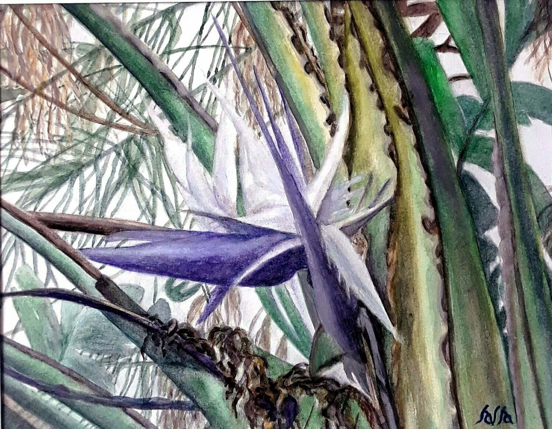 Bird of Paradise card - CRL016