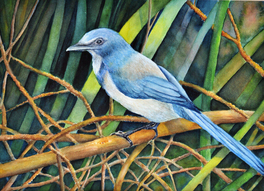Scrub Jay Haven - CSM029