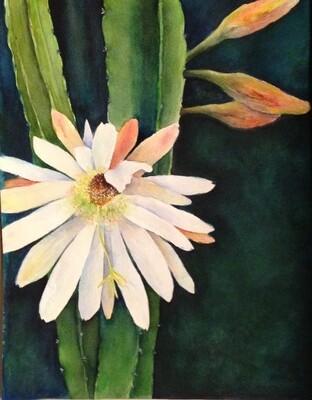 Night Bloom - CSM036