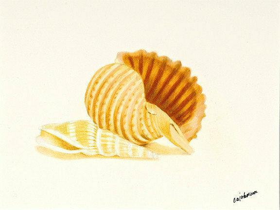 Banded Tun Shells Giclee - CAJ092