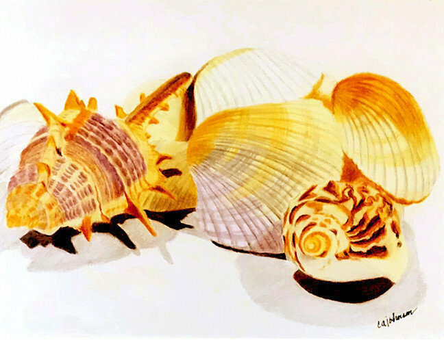 Shells Giclee Set - CAJ095