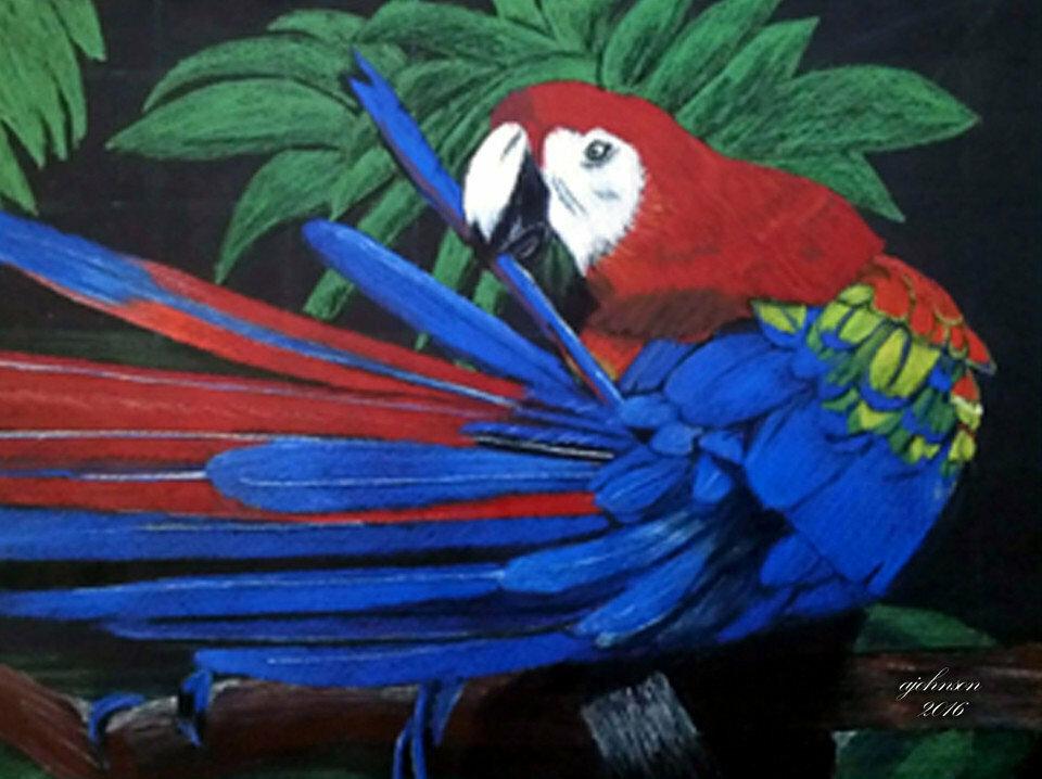 Blue Parrot - CAJ103