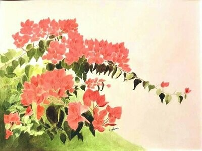 Beautiful Bougainvillea - CAJ028