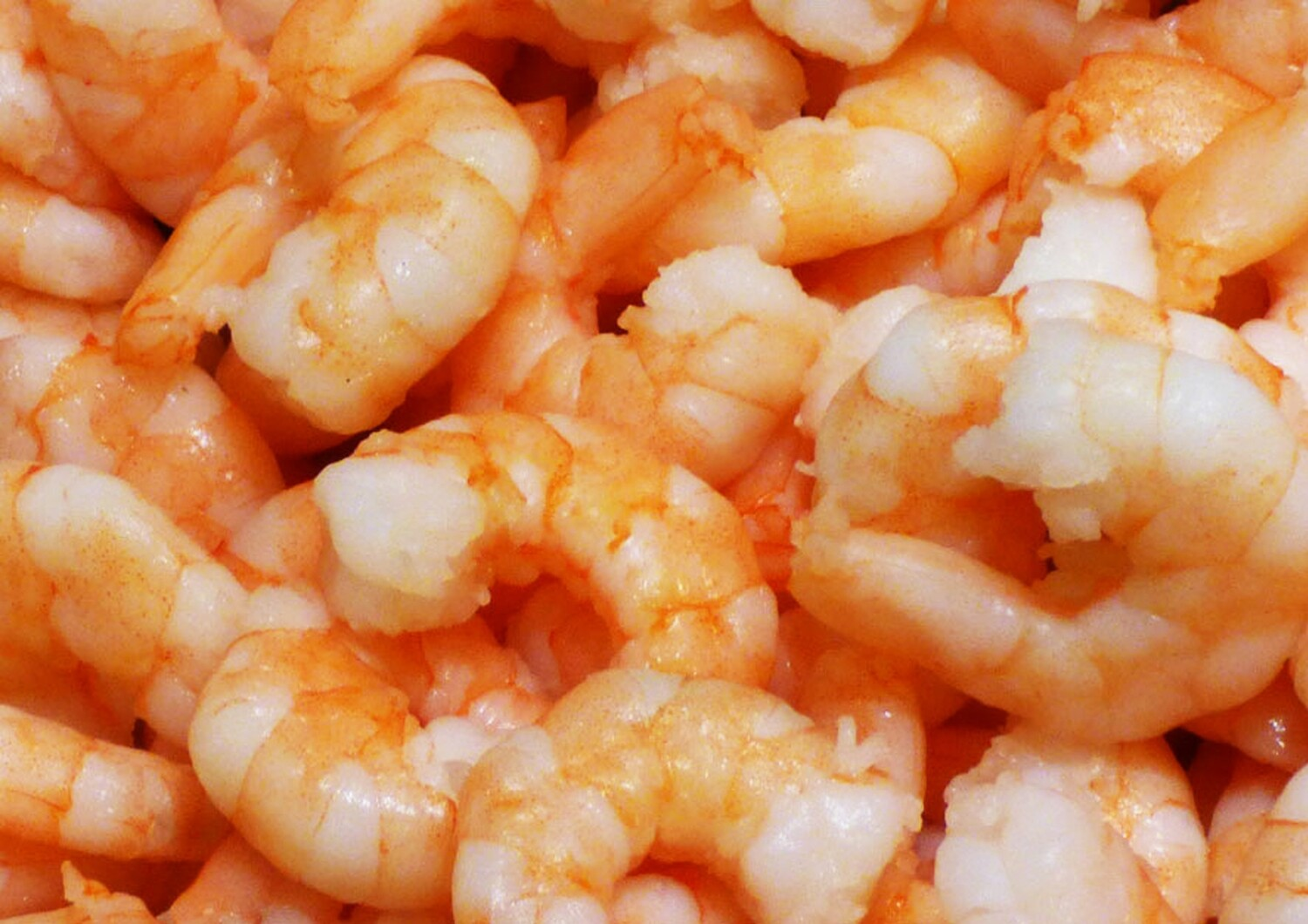 Cold Water Prawns