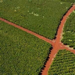 Kenya - Honey Bush Estate