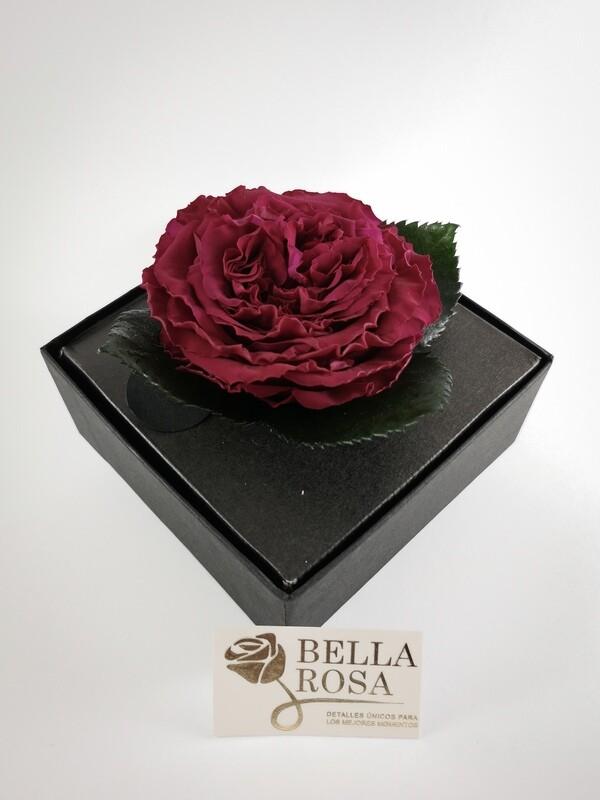 Rosa Preservada Carmen Rosada Caja Acrílica