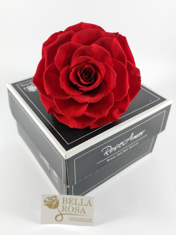 Rosa Preservada XXLB Roja