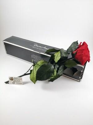 Rosa Roja Con Tallo