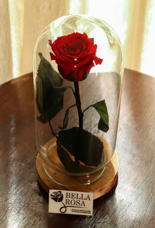 Rosa Roja con Tallo en una cúpula Moderna