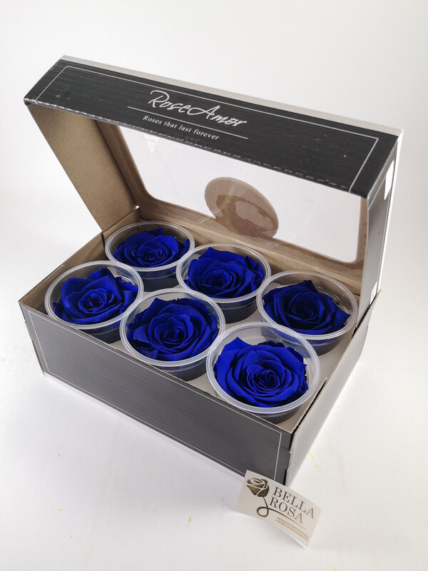 Caja de 6 rosas preservadas color azul