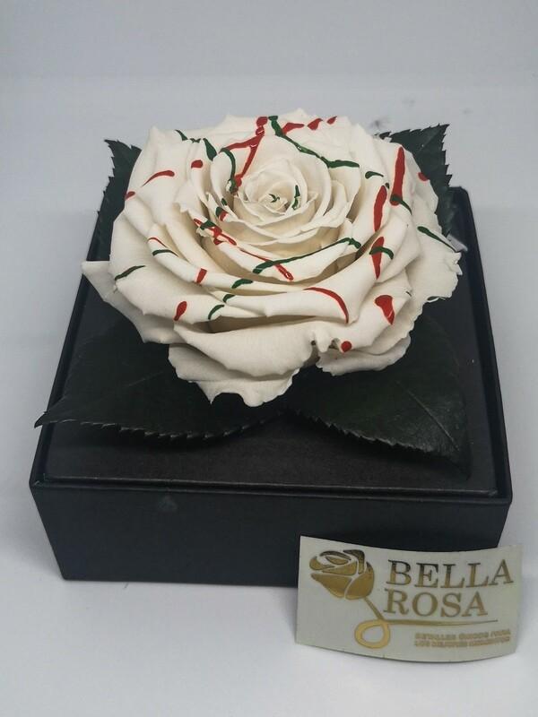 Rosa Preservada Blanca con Lineas de Colores en Caja Acrílica
