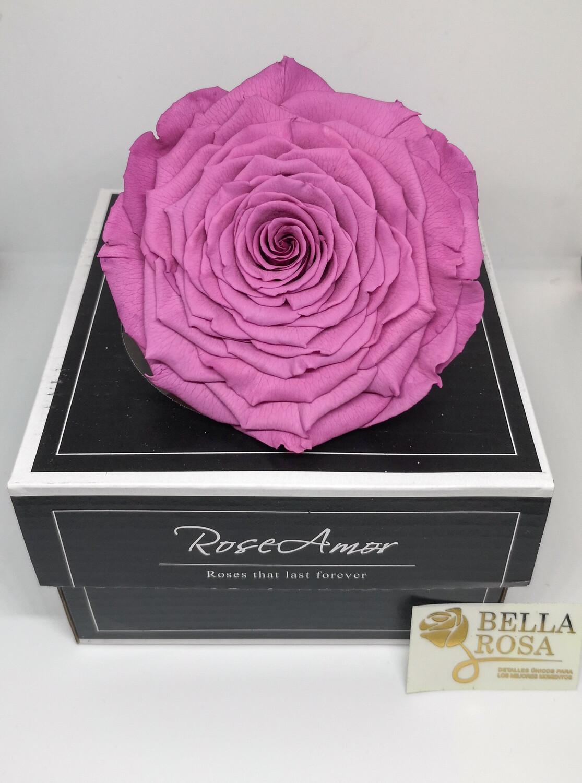 Rosa preservada XXL