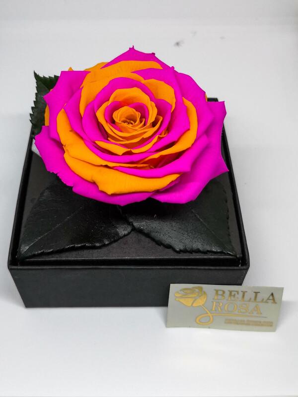 Caja acrílica con rosa preservada Bi color