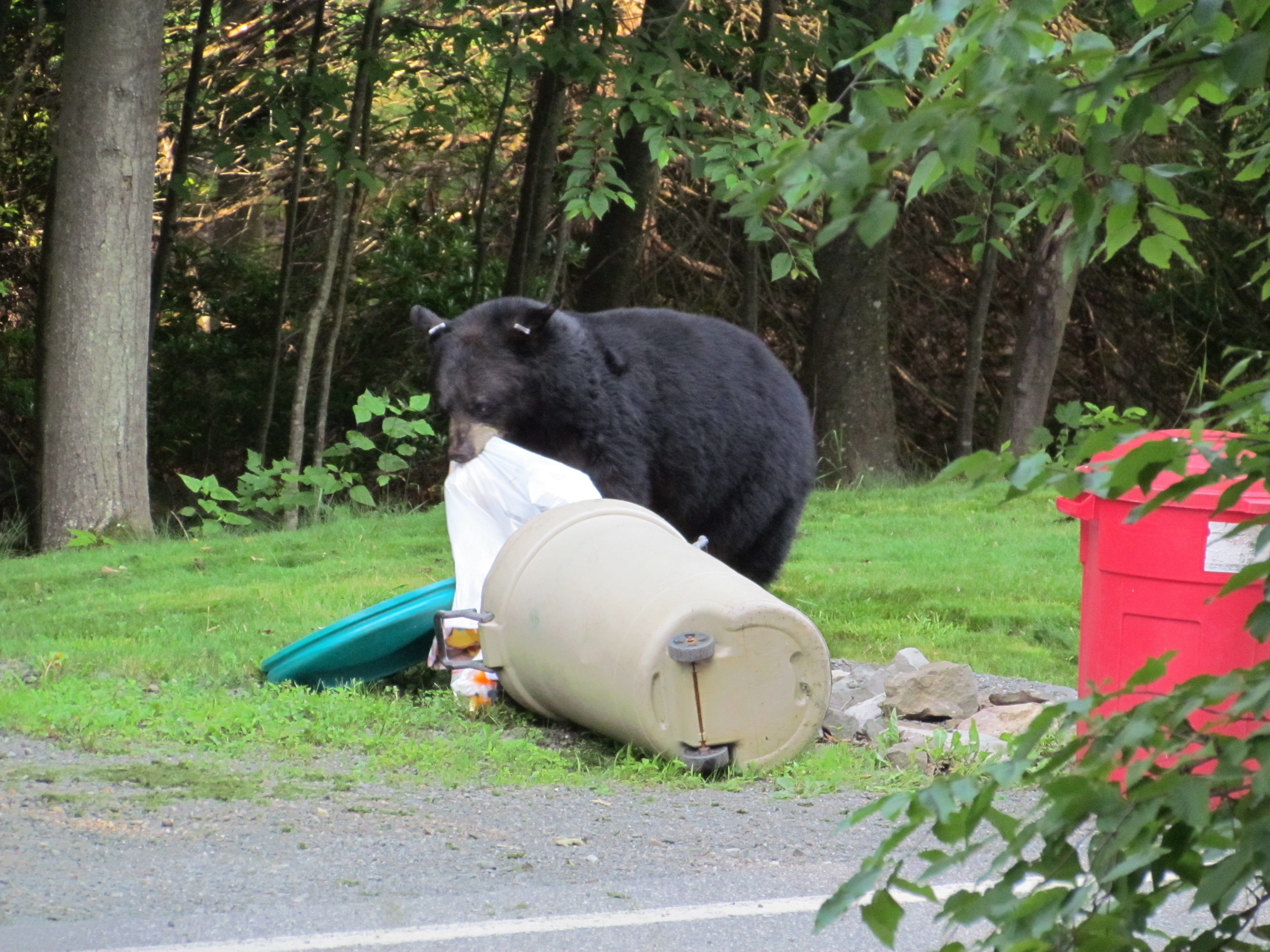 Community Ordinances (Anti-feeding Regs for Bears) ORD-pdf